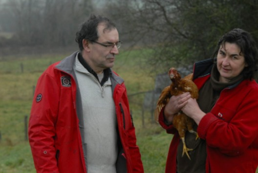 1600 poules s'arrêtent de pondre à cause d'antennes GSM Mobile